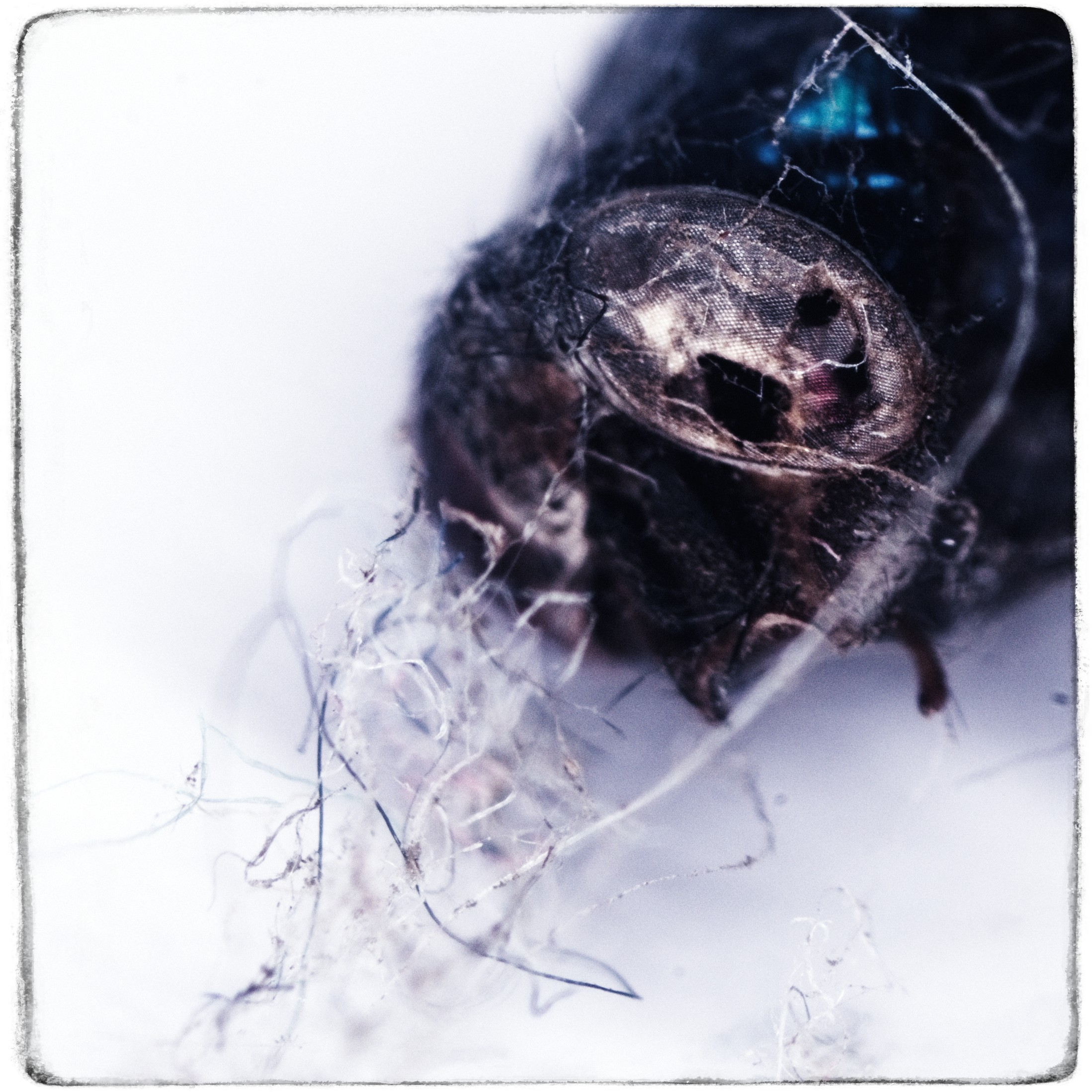 A macro photo of the remains of a fly.