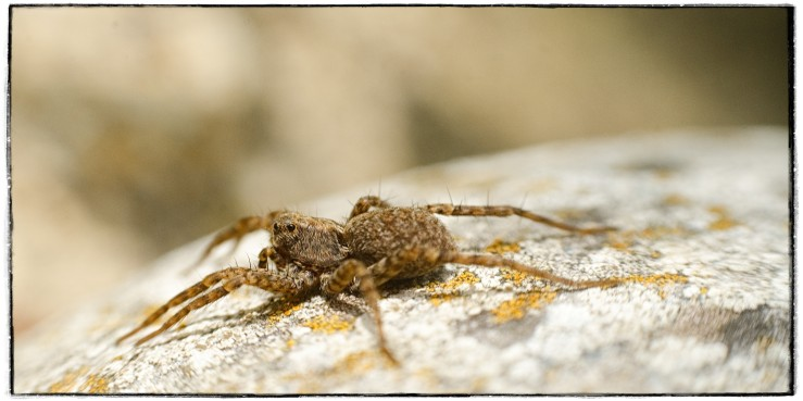 A macro photograph of a spider.