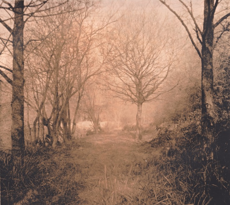 A lith print of trees. Taken at Lake Community Gardens, Isle Of Wight